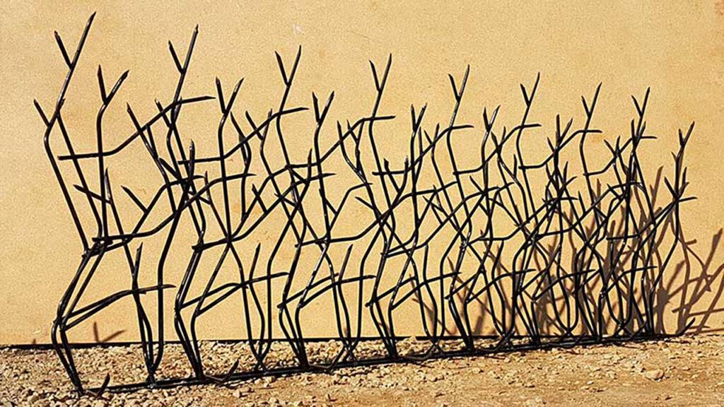 سفارش حفاظ شاخ گوزنی در کردستان